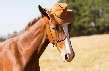 Horse Wearing A Hat