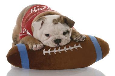 football_puppy