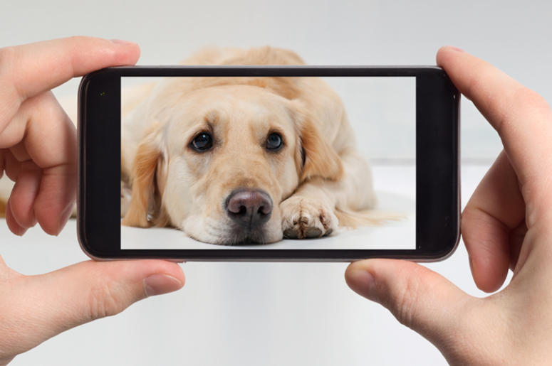 Dog on a smart phone