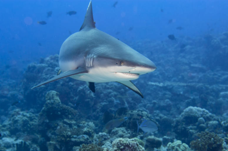 Shark Attack On Cape Cod Kills Swimmer | 100 3 Jack FM