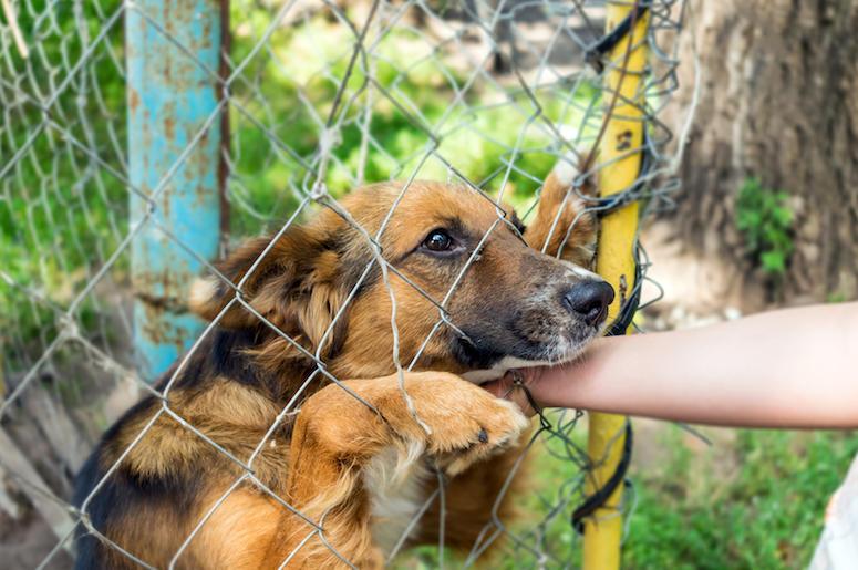 Dog, Outdoor Shelter, Human Hand, Sad, Cute