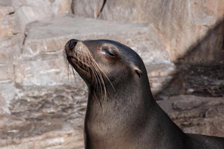 Fur Seal, Sea Lion, Sunbathing