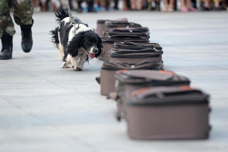 Drug-Sniffing Dog, Luggage, Demonstration, China