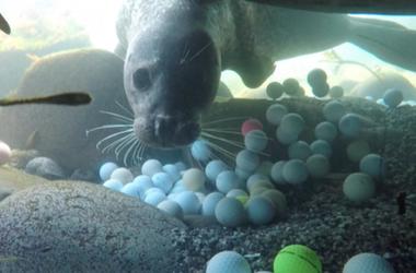 Golf Balls in the Bay