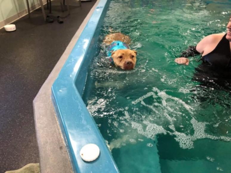 Chance enjoying a nice swim!