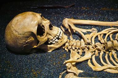 human_bones