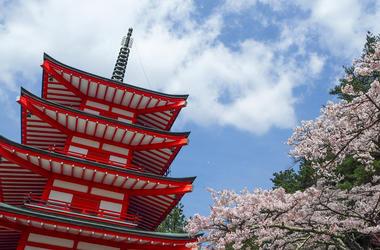 japanese_cherry_blossom_tree
