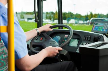 Bus Driver, School Bus, Bus