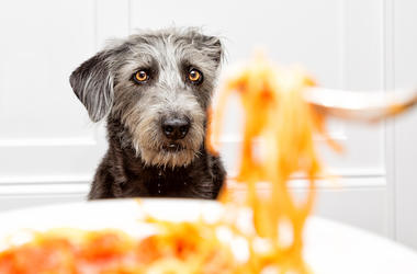 Dog, Spaghetti, Plate, Food