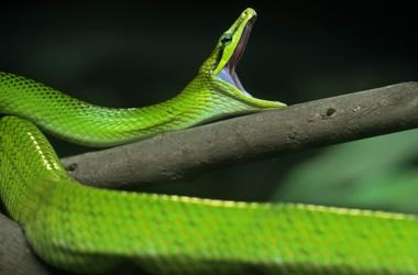 North Texas Snakes | 98 7 KLUV