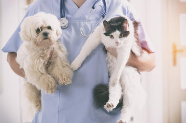 vet_dog_cat