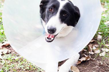 dog_cone