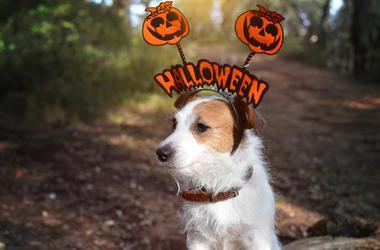 dog_costume