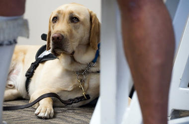 Service Dog, Emotional Support Animal