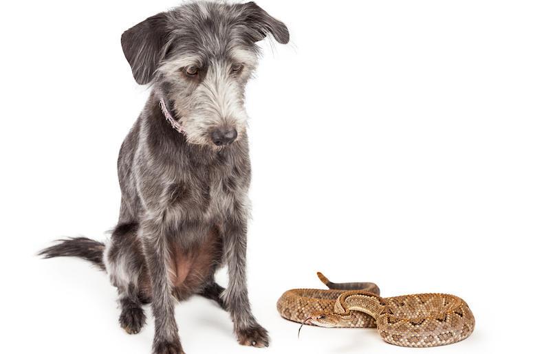 Dog and Snake
