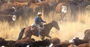 Don't blame cattle industry for climate change, air quality scientist says
