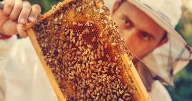 Beekeepers worried as EPA loosens rules on powerful bug-killer