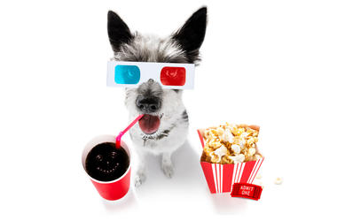 K9 Cinemas Plano Texas