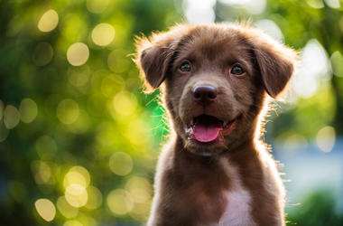 most popular puppy names