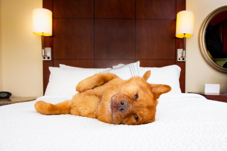 Hotels.com, Hotels.com canine critic, canine critic contest