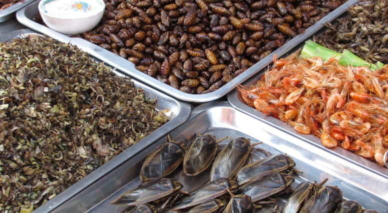 a display of bugs cooked for snacks