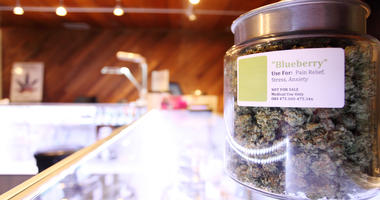 Medical marijuana in large jar at a legal marijuana dispensary.