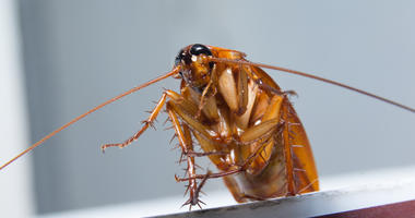 Cockroaches in the house. is a bug