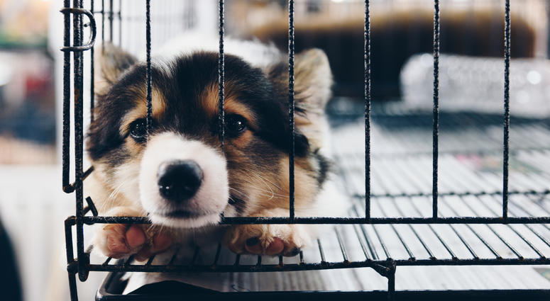 USDA sued by Missouri group over handling of puppy mills