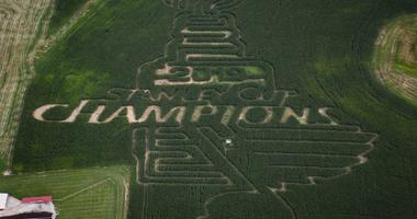 PICS: Eckert's sculpts Blues-themed corn maze to celebrate Stanley Cup win