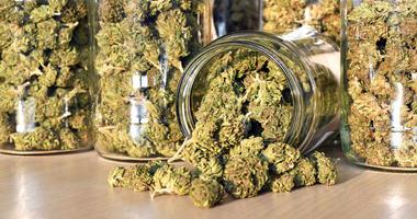 marijuana buds in jars