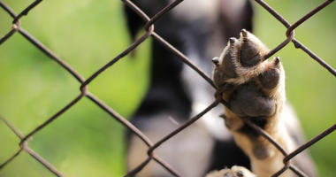 animal dog behind fence with paw up