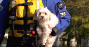 HSMO Disaster Rescue Team