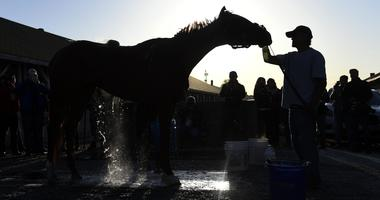 Kentucky Oaks hopeful Rayya receives a bath after morning workouts at Churchill Downs.