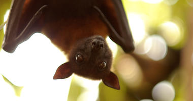 Bat at budapest zoo