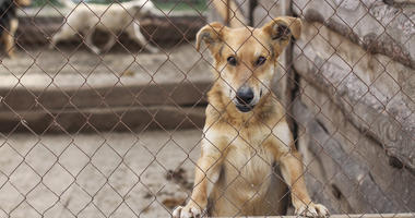 Dogs in shelter cages needs family and care