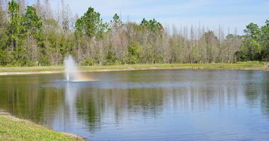 Tropical pond, taken in Tampa, florida