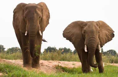 Elefantes Celebran El Dia De Pascua