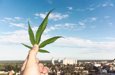 Hand holding Cannabis leaf at blurred background