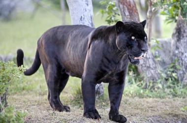 Pelicula Mowgli
