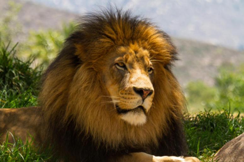 leon amistoso