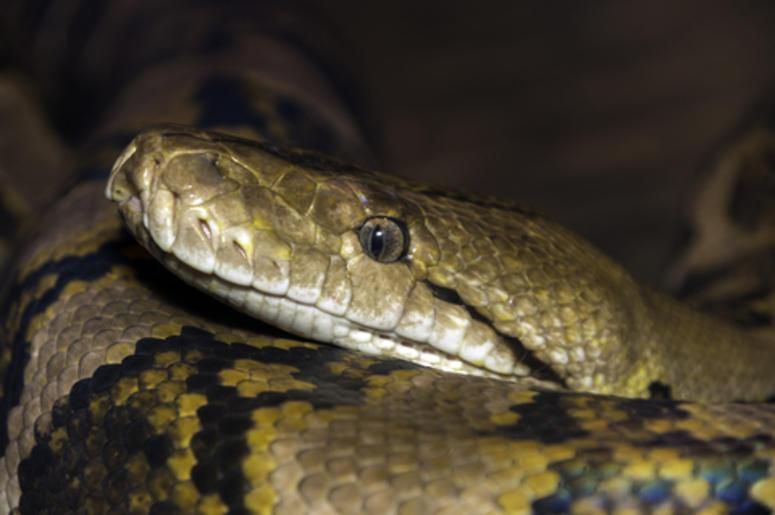 niñas juegan con serpiente