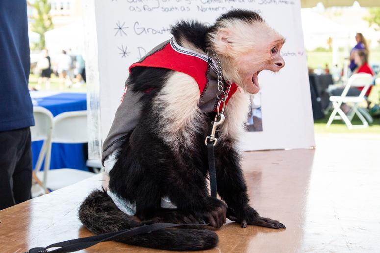 Pets & The People of PetaPalooza 3