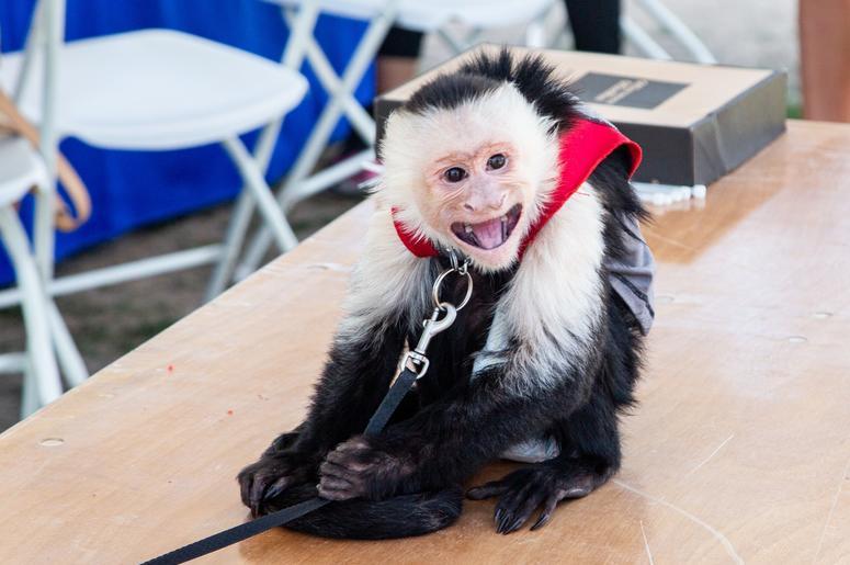 Pets & The People of PetaPalooza 5