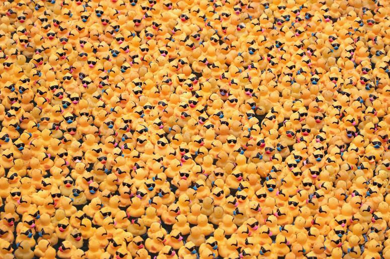 Over 63 000 Rubber Ducks Swim Across The Chicago River
