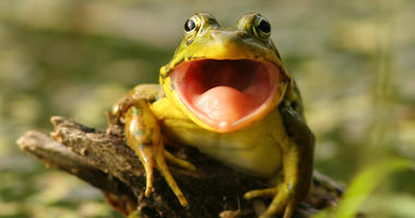 Yikes! A Woman's Salad was So Fresh a Frog was Found Lurking in the Lettuce