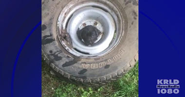Puppy Stuck in tire wheel