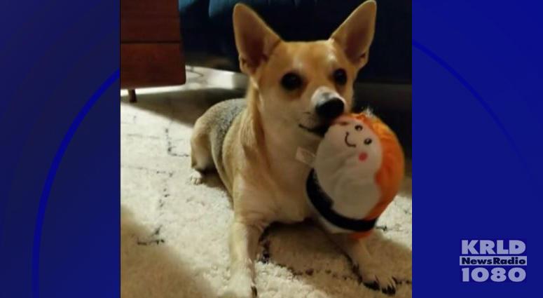 Dog Custody Battle