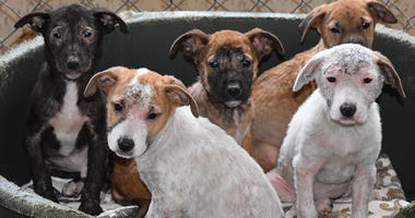 Surrendered Dogs