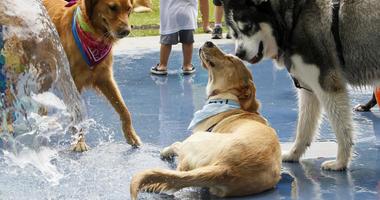 Dog Splash Park