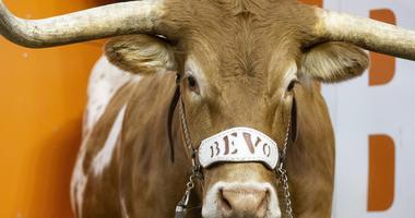 Bevo, Texas Longhorns